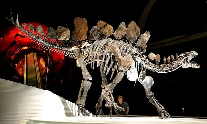 the world's most complete Stegosaurus