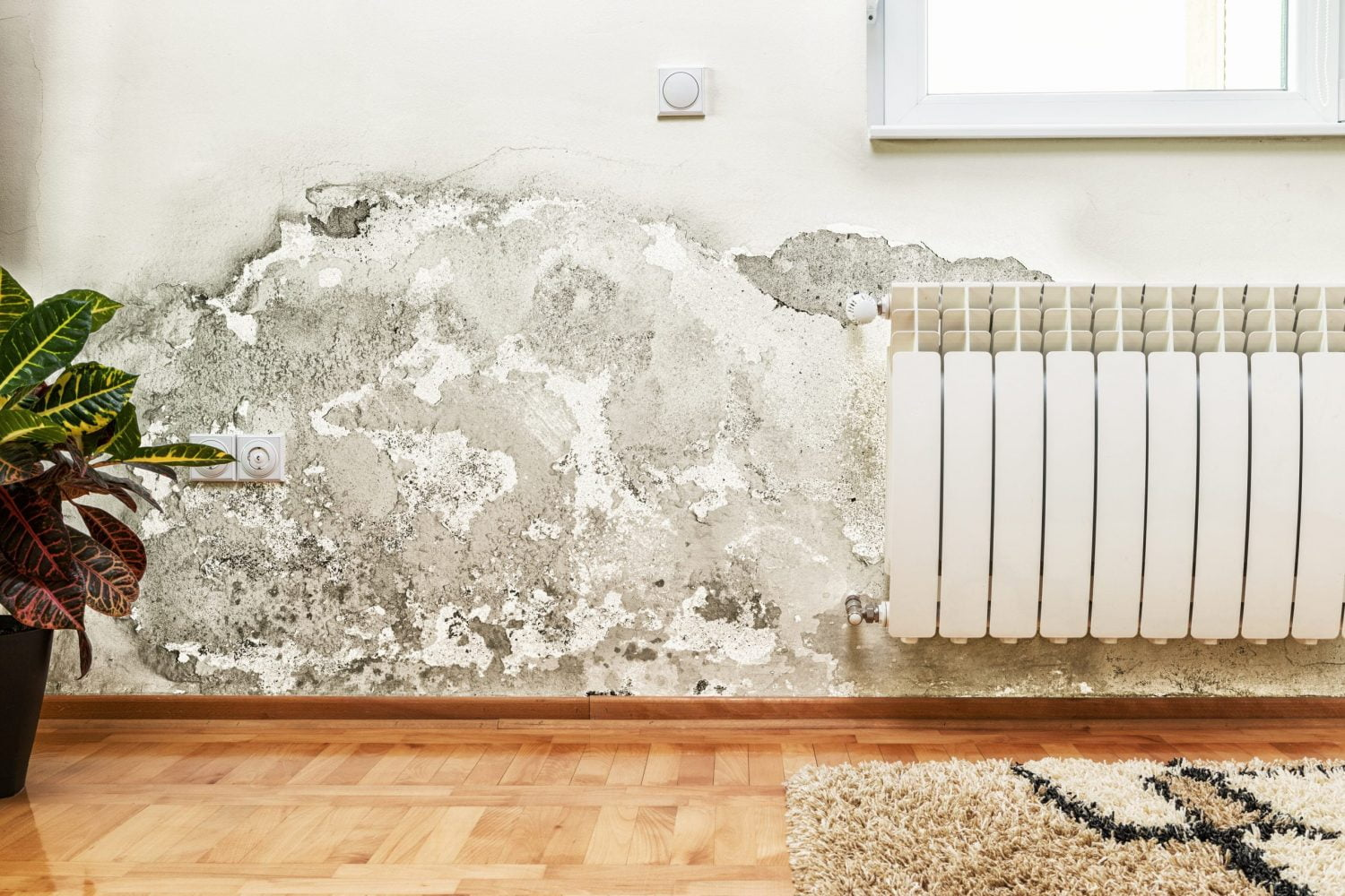 Mould and moisture buildup on wall